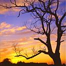 Poland. Sunset with silhouette of a tree.