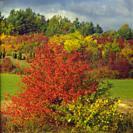 Poland. Autumn in Mielnik village. Podlasie region.