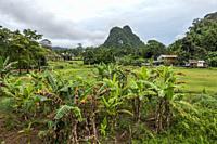 Scenic view at Kampung Benuk, Padawan, Sarawak, East Malaysia