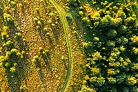 Aerial View Of Car Near Country Road Thgrough Forest And Green Meadow Landscape In Sunny Summer Morning. Top View Of Beautiful European Nature From Hi...