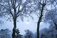 Snow covered Retiro park. Madrid, Spain.
