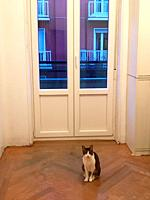 Cat at home, sitting by the window, looking at the camera.
