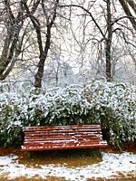 Snowfall in El Retiro park. Madrid, Spain.