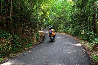 Mount Matang forest path to Sri Maha Mariamman Temple, Hindu Temple, Kuching, Sarawak, Borneo