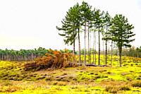 Winter woods, The Netherlands, Europe.