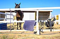 There is a saddle and a rug on the fence, a horse is tied behind the fence.