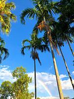 Rainbow behind palm trees in Darwin, Australia.