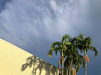 Palm trees against wall and stormy sky in Darwin, Australia.