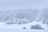 Espino Albar and Beech Forest in the Raso de Opakua snowed in winter in the Port of Opakua, in the Natural Park of the Sierra de Entzia. Alava. Basque...