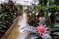 exhibition and sale of garden plants, Llucmajor, Mallorca, Balearic Islands, Spain.