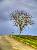 bare winter tree beside country road in winter, near Lauzun, Lot-et-Garonne Department, Nouvelle-Aquitaine, France.