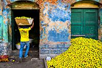 A Colombian worker carries a basket loaded with green oranges (for juicing) in an open-air fruit market in Barranquilla, Colombia.