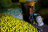 An Afro-Colombian worker carries a basket loaded with green oranges (for juicing) into a storage room of the fruit market in Barranquilla, Colombia.