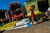 An Afro-Colombian worker carries a basket loaded with green oranges (for juicing) in an open-air fruit market in Barranquilla, Colombia.