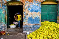 A Colombian worker carries an empty basket while unloading green oranges (for juicing) in an open-air fruit market in Barranquilla, Colombia.