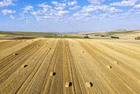 Bales of straw in cornfield after wheat harvest. In the Campiña Cordobesa, the fertile rural area south of the town of Córdoba. Aerial view. Drone sho...
