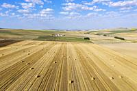 Bales of straw in cornfield after wheat harvest and cultivated young olive trees (Olea europaea) in the Campiña Cordobesa, the fertile rural area sout...