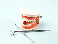 plastic model of a human jaw with white teeth and various dental instruments for the doctor's work in the oral cavity, blue background, close up.