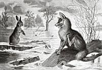 The fox looking at the hare in a river. Old 19th century engraved illustration from El Mundo Ilustrado 1879.
