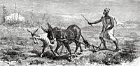 Arab farmer working an agricultural field, plowing the land with a donkey and a goat. Morocco, North Africa. Old 19th century engraved illustration fr...