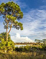 Webb Lake in Fred C. Babcock/Cecil M. Webb Wildlife Management Area in Punta Gorda Florida USA.