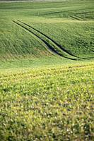 Beautiful green field with some tractor tracks.