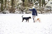 Woman with two dogs in the snow, The Netherlands, Europe.