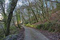 A country lane though woodland during winter at Bampton, Devon.