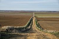 Extensive view of the road to Santiago del Sureste moving away towards the horizon, as it passes through the province of Valladolid. Castile and Leon....
