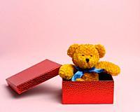 cute teddy brown bear sitting in a red gift box on a pink background.