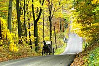 Amish horse and buggy on a road in autumn Millersburg and Sugarcreek Ohio OH.