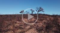 Fire in Zalamea, Huelva, Andalusia, Spain, Europe