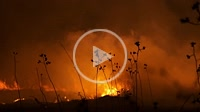 Fire in rural area, Seville, Andalusia, Spain, Europe