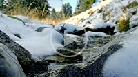River water slowly flowing near the snowy road in winter New Year Time