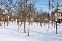 Detroit, Michigan - Trees in winter, part of the Hantz Woodlands tree farm. The vast amount of empty land in Detroit has allowed the company, with vol...