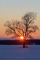 Emmett, Michigan - Sunset over a snowy field and a lone tree on a Michigan farm.