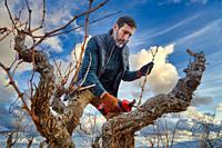 Farmer with electric pruning shears, Vineyard, Rioja, Spain, Europe.