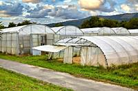 Greenhouse, Institute for Agricultural Research and Development and the Natural Environment, Basque Country, Spain, Europe.