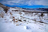 Snowy landscape in Libros, in the Sierra Javalambre. Teruel.