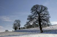 Solitary tree in a snow covered landscape near the Dutch hamlet Holset.