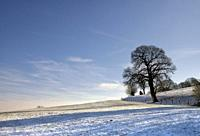 Solitary tree in a snow covered wide open landscape near the village Vaals in the Dutch province Limburg.