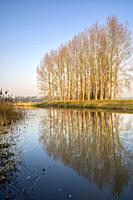 Trees along the river Berkel on a beautiful morning near the Dutch village Lochem.