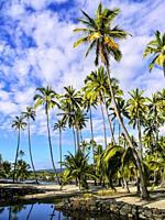 Honaunau Beach. Hawaii. USA.