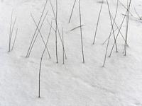 Poland. Abstract winter picture.