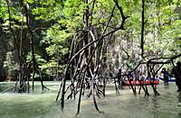 Koh Panak Cave with a mangrove. Ao Phang Nga Marine National Park, Andaman Sea, Thailand.