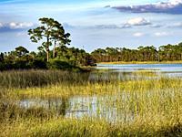 Webb Lake in Fred C. Babcock Cecil M. Webb Wildlife Management Area in Punta Gorda Florida USA.