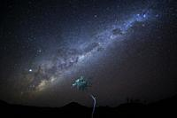 Nightsky with milky way over Namibian desert with tree lit, Damaraland, Namibia.