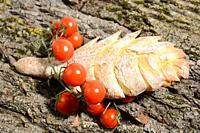 Italian food for Mediterranean healthy diet.