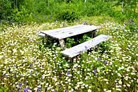 Picnic table surrounded by field of wildflowers near Dorion and Ouimet Ontario Canada.