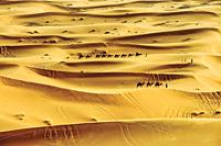 Sand Dunes, Erg Chebbi, Sahara Desert, Morocco.